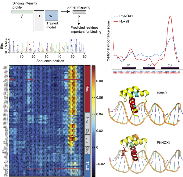 Affinity regression predicts the recognition code of nucleic acid-binding proteins